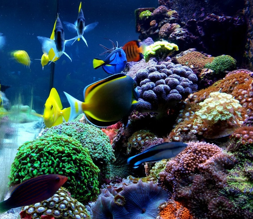 Spindle Professional case study: Tropical Marine Centre